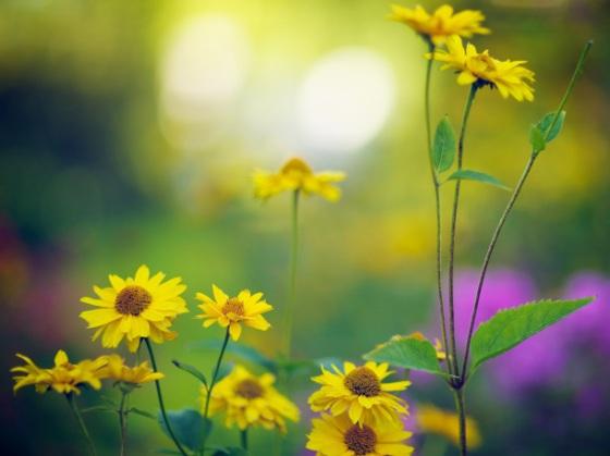 late_summer_bokeh-1920x1440