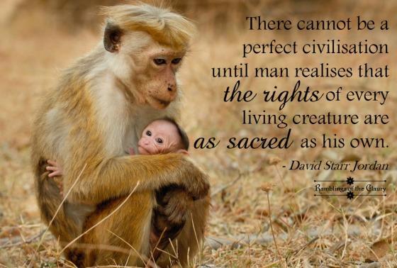 perfect civilisation