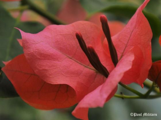 oriental flower