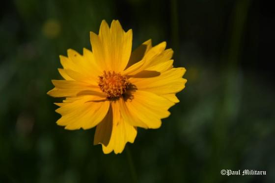 yellow-ornamental-flower